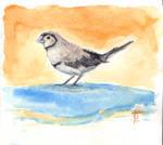Little Finch