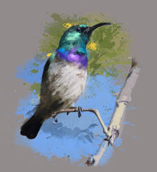 Sunbird by Feuillyien