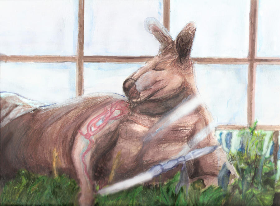 kangaroo jack wallpapers