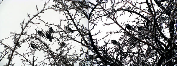 the birds by slinkpink