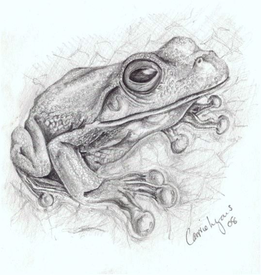 pretty tree frog by carriephlyons on DeviantArt