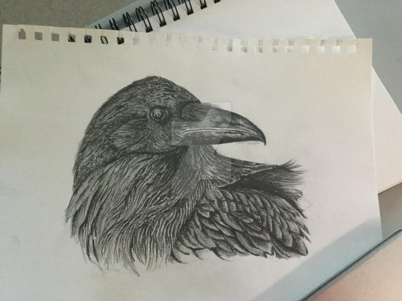 Raven 2 by carriephlyons