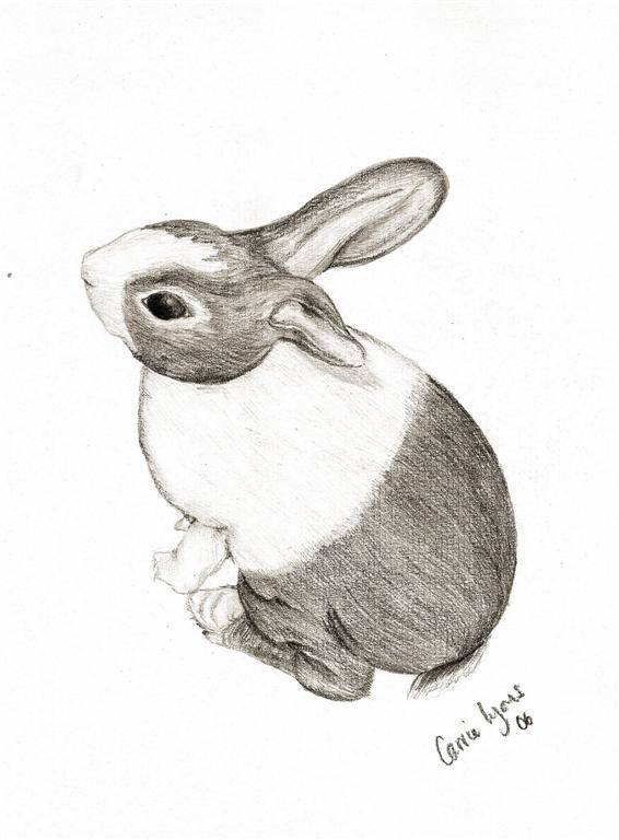 quartz bunny drawing by carriephlyons
