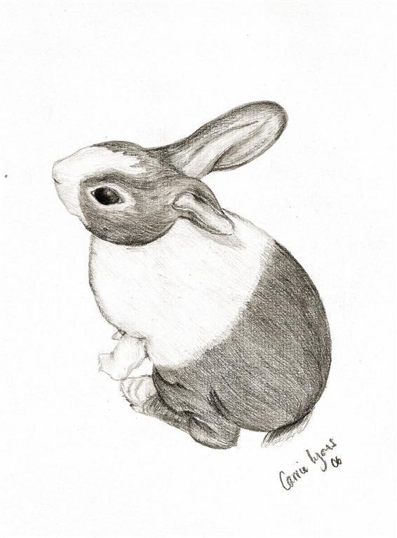 Bunny rabbit drawing