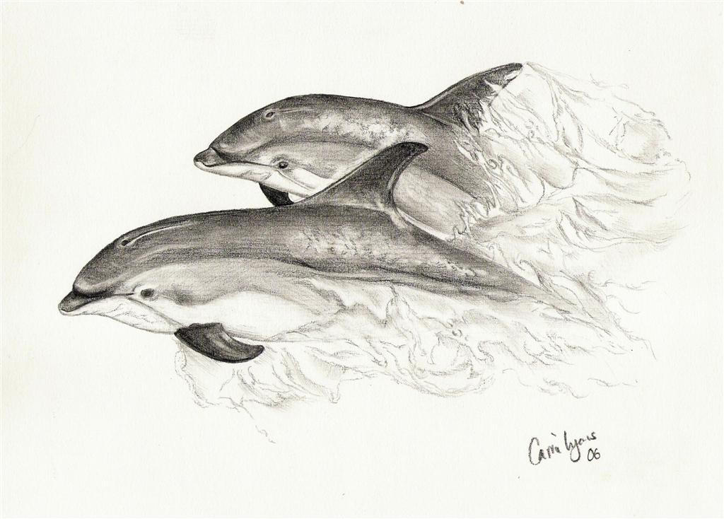 Dolphin Swimming Sketch Dolphins Swimming Together by