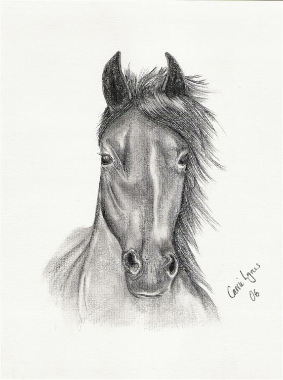 Horse drawing by carriephlyons