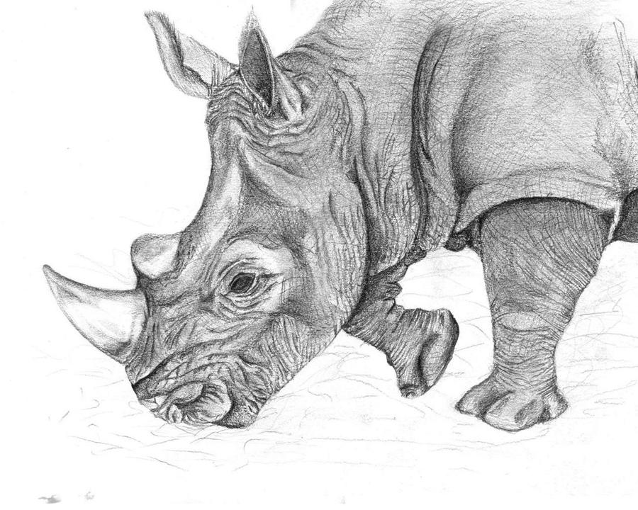 how to draw a rino hed