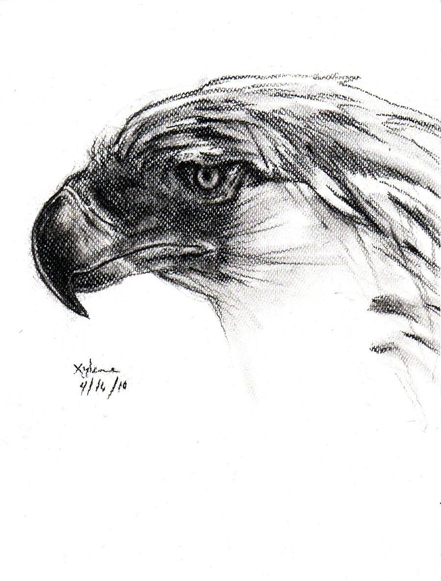 Philippine Eagle by xypunk on DeviantArt