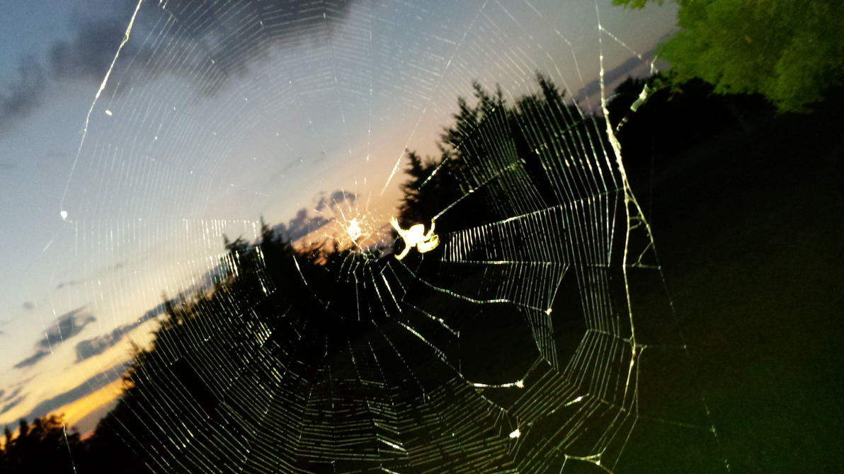 Work the Web as the Sun Sets by movieartman