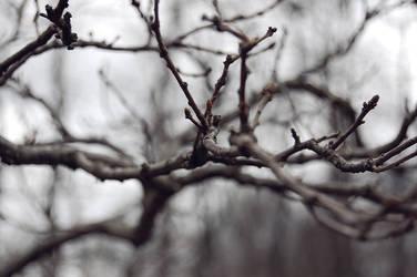 Tree by t1R3d