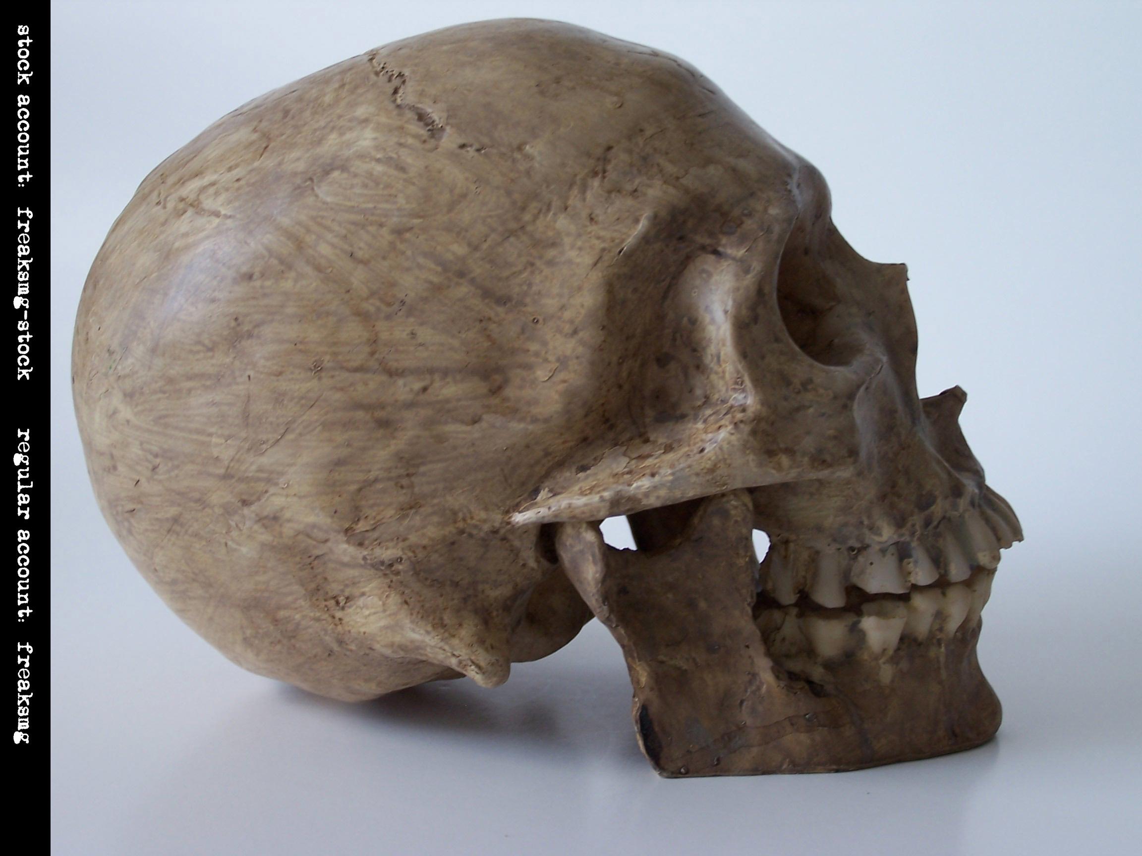 freaksmg-stock - new skull 2