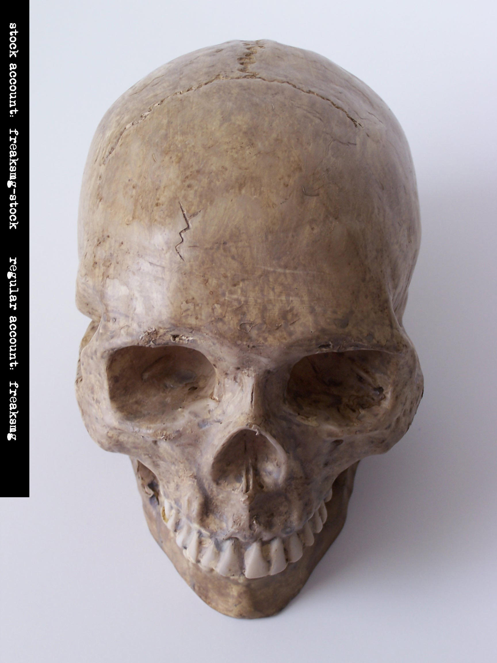 freaksmg-stock - new skull 4 by freaksmg-stock