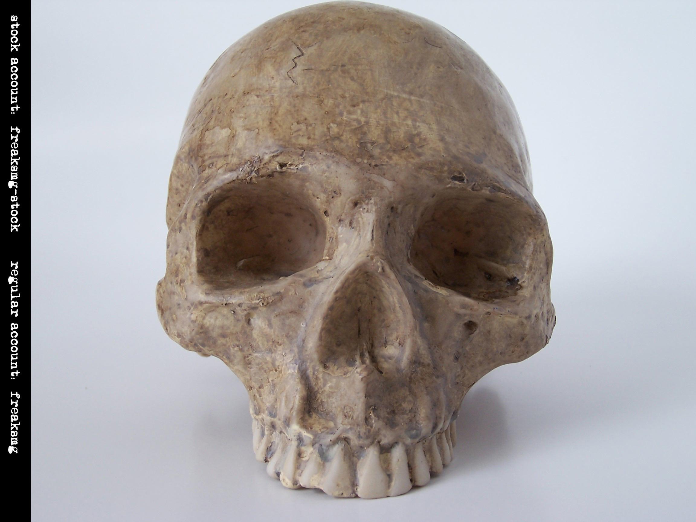 freaksmg-stock - new skull 8