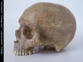freaksmg-stock - new skull 10 by freaksmg-stock