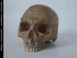 freaksmg-stock - new skull 11 by freaksmg-stock