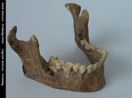 freaksmg-stock - new skull 16