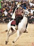 Knight on horse Running