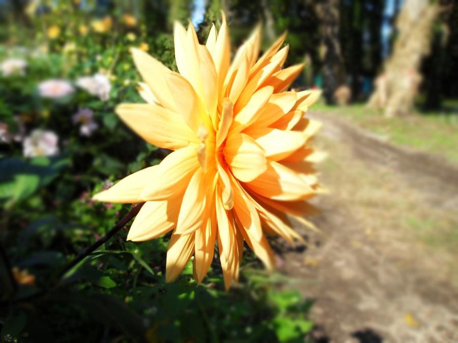 Orange Flower by Idellechi