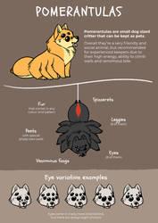 Pomerantula Guide [Semi-Open Species]