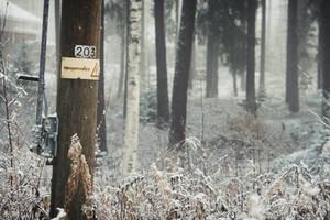 danger lies in the woods by yunyunsarang