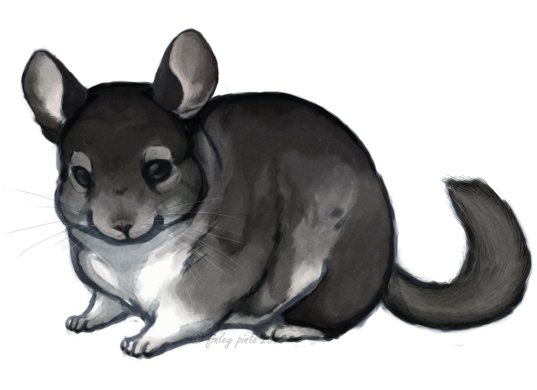 chinchilla painting chosen for the ecbc calendar by prince ass