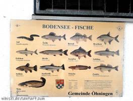 Bodensee-Fische by nihiski