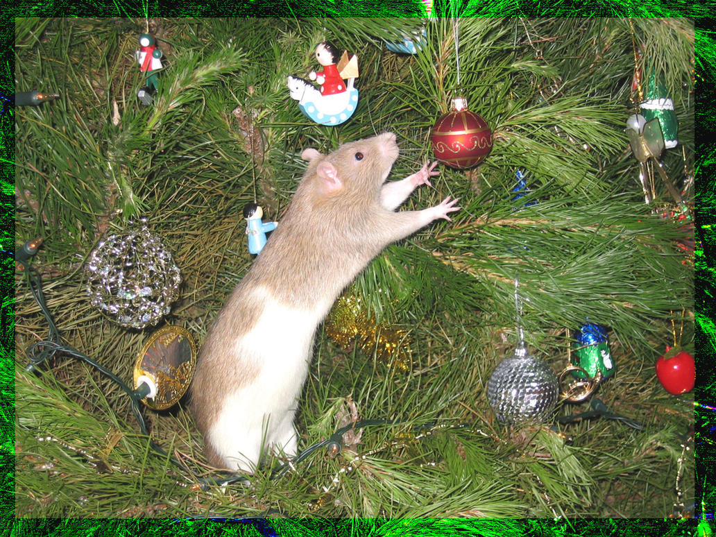 Christmas Rat by CuteLittleTheatreKid on DeviantArt