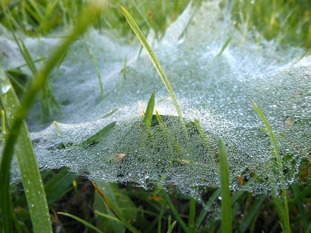 Dewy Web by skandyl
