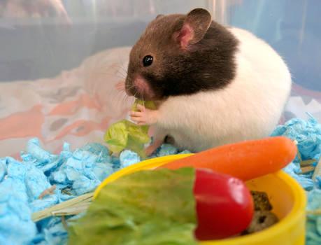 The Lettuce lover Hamster