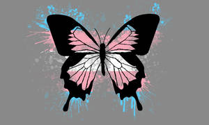 Transgender Butterfly Pride Wallpaper
