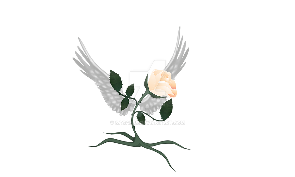 Rosa by sagaers