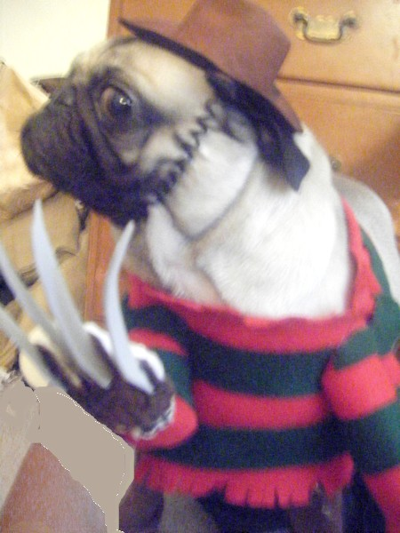 Dog's Freddy Krueger Costume by sleepyrobot13