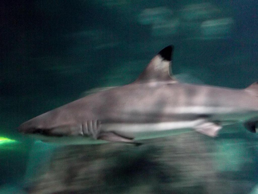 Half shark half horse - photo#17
