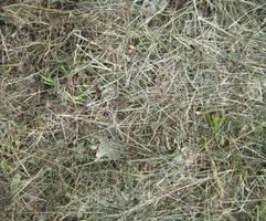 Grass 3 by TextureCat
