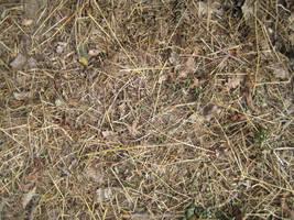 Grass 4 + other stuff by TextureCat