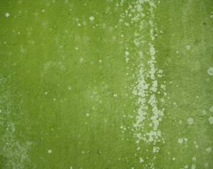 Mossy wall 4