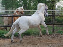 white horse 2 by Esveeka-Stock