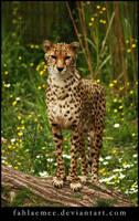 Cheetah 1 by Esveeka-Stock