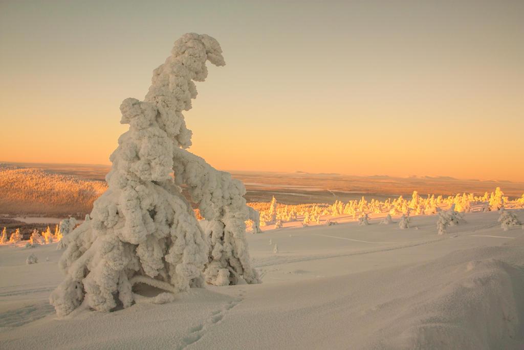 Frozen tree by Esveeka-Stock