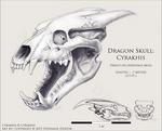 Dragon Skull - Cyrakhis