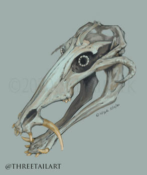 Scabrous Engloa Skull