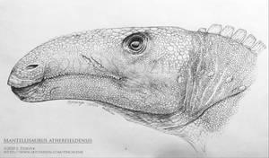 The Mistaken One - Mantellisaurus atherfieldensis