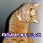 wtf moment cat