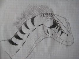 Female raptor portrait