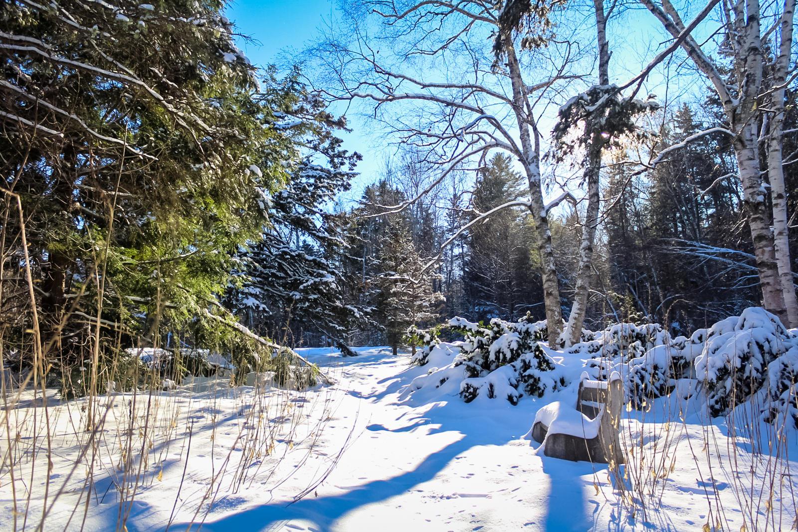 Snowscape by lordcemonur