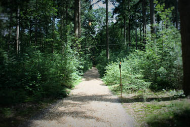 Marriage ground in the middle of the forest 4/7