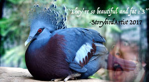 Victoria Crowned Pigeons.  They are fa(t)bulous