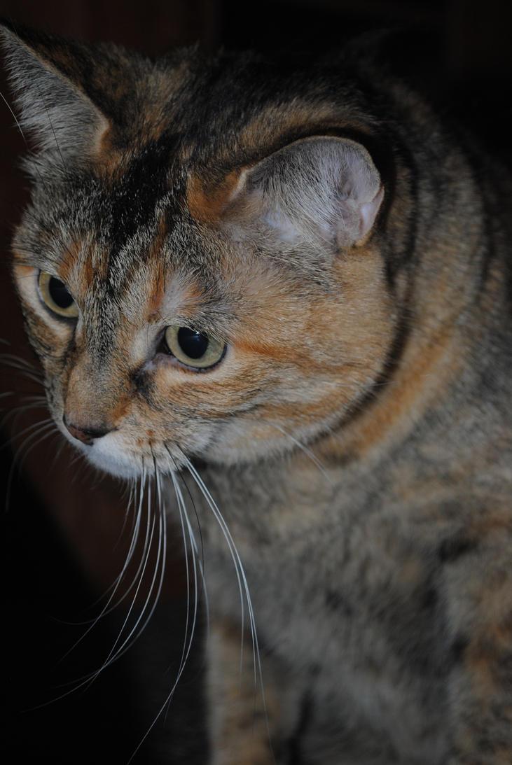 Kitty by illyiliana