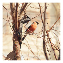 Bird. by Lileinaya