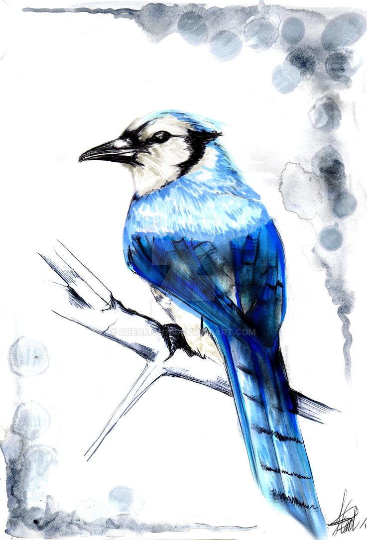 Blue Jay. by DreamOn11